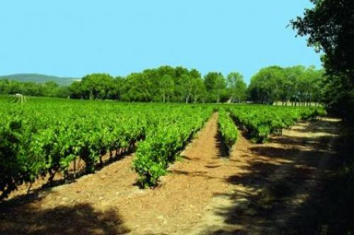 Vin Provence & Terroir à La Celle : Domaine Saint Julien