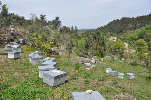 apiculteur mazaugues