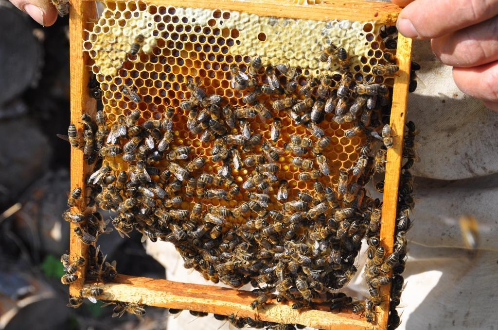 apiculteur saint maximin
