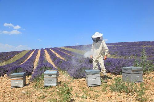 apiculteur pourrieres