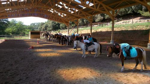 Activités équestres : leçon cheval & poney