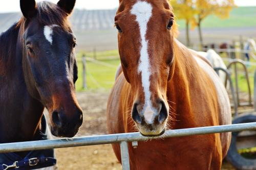 Rando équestre (cheval)