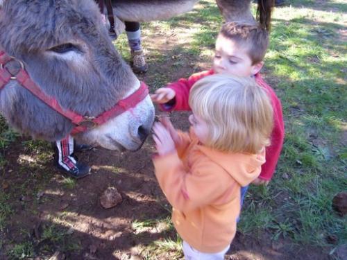 Activités équestres : balade au pas des ânes bâtés