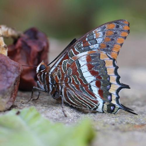 Jardins de papillons et domaine d'exception