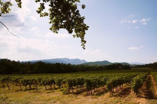 Promenade vin & vignes à cheval