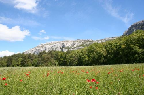 Forêt et falaises de la Sainte-Baume