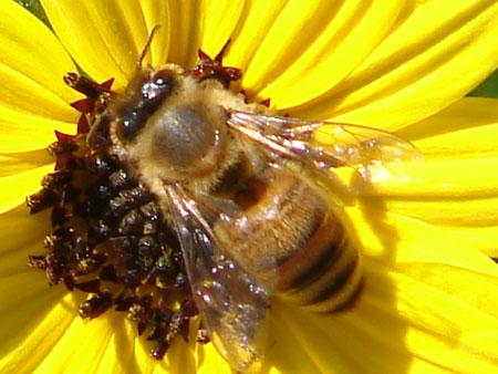 Le miel et les abeilles de Fabienne